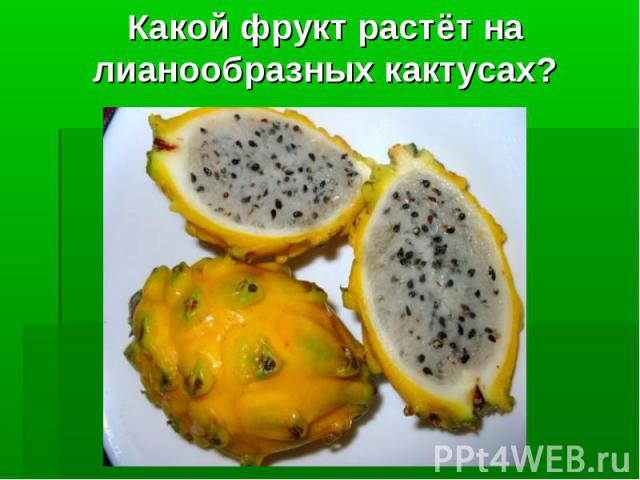 Какой фрукт растёт на лианообразных кактусах?