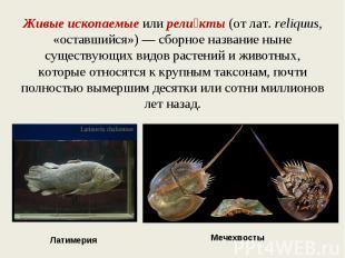 Живые ископаемые или реликты (от лат.reliquus, «оставшийся») — сборное название