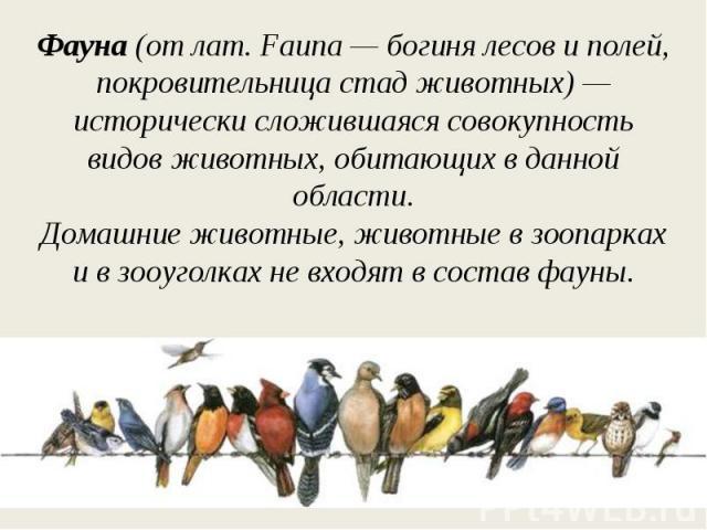 Фауна (от лат. Fauna— богиня лесов и полей, покровительница стад животных)— исторически сложившаяся совокупность видов животных, обитающих в данной области.Домашние животные, животные в зоопарках ив зооуголках не входят в состав фауны.
