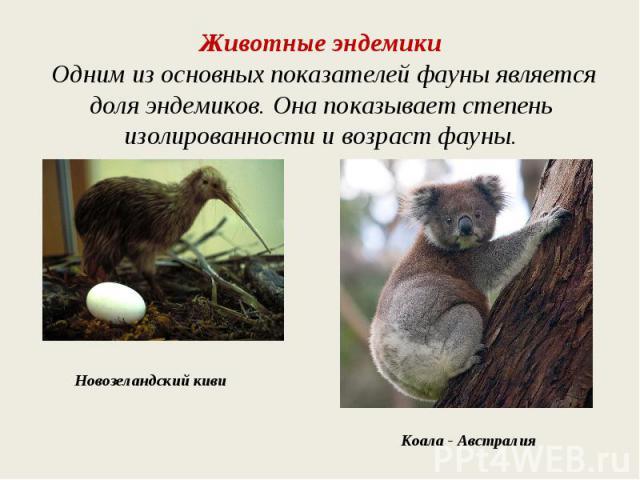 Животные эндемики Одним из основных показателей фауны является доля эндемиков. Она показывает степень изолированности и возраст фауны.Новозеландский кивиКоала - Австралия