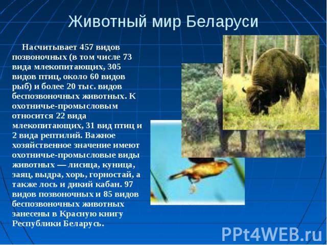 Животный мир БеларусиНасчитывает 457 видов позвоночных (в том числе 73 вида млекопитающих, 305 видов птиц, около 60 видов рыб) и более 20 тыс. видов беспозвоночных животных. К охотничье-промысловым относится 22 вида млекопитающих, 31 вид птиц и 2 ви…