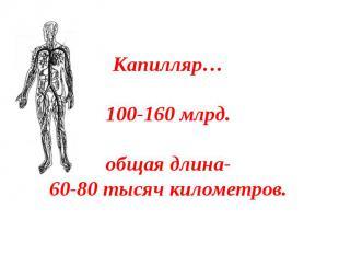 Капилляр…100-160 млрд.общая длина-60-80 тысяч километров.