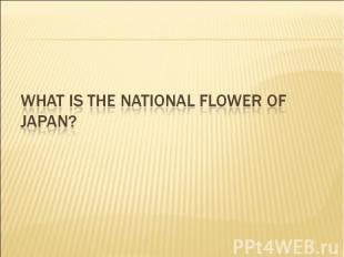 What is the national flower of Japan?
