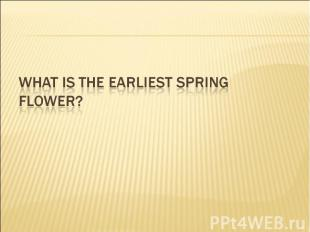What is the earliest spring flower?
