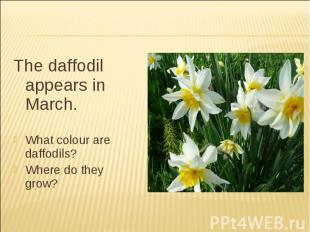 The daffodil appears in March.What colour are daffodils?Where do they grow?
