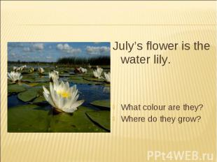 July's flower is the water lily.What colour are they?Where do they grow?
