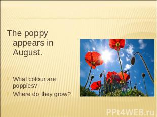 The poppy appears in August.What colour are poppies?Where do they grow?