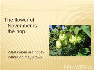 The flower of November is the hop.What colour are hops?Where do they grow?