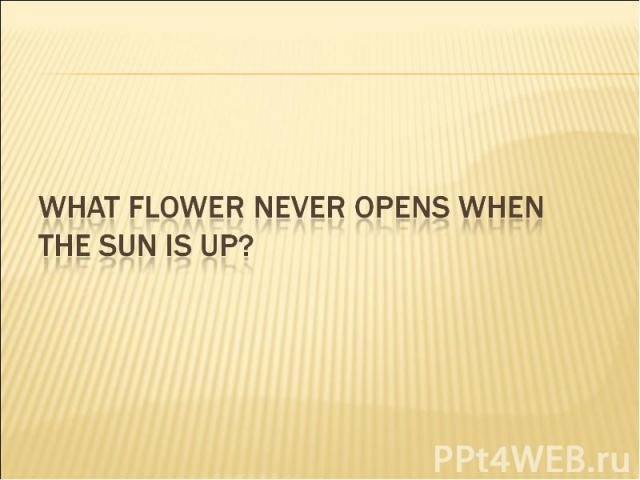 What flower never opens when the sun is up?