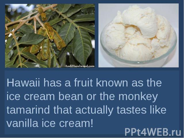 Hawaii has a fruit known as the ice cream bean or the monkey tamarind that actually tastes like vanilla ice cream!
