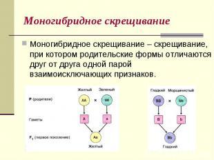 Моногибридное скрещиваниеМоногибридное скрещивание – скрещивание, при котором ро