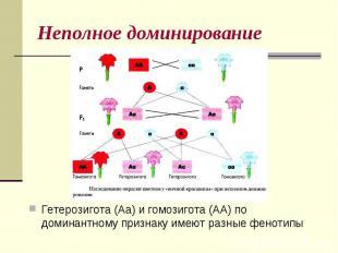 Неполное доминированиеГетерозигота (Аа) и гомозигота (АА) по доминантному призна