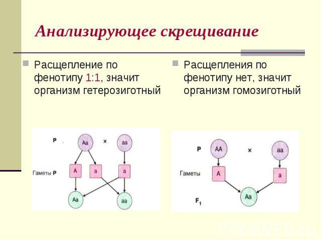 Анализирующее скрещиваниеРасщепление по фенотипу 1:1, значит организм гетерозиготныйРасщепления по фенотипу нет, значит организм гомозиготный