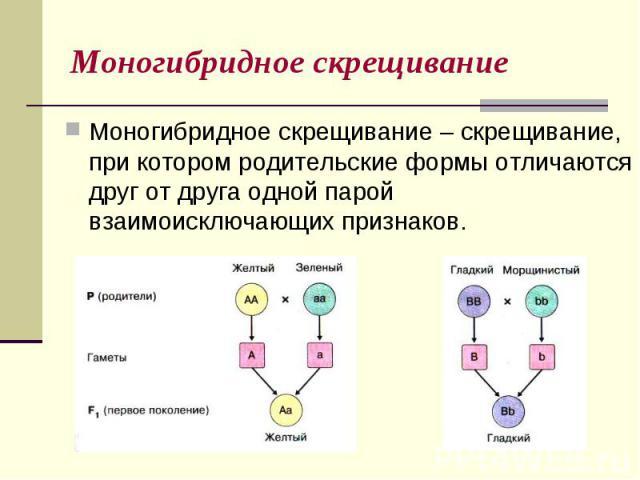 Моногибридное скрещиваниеМоногибридное скрещивание – скрещивание, при котором родительские формы отличаются друг от друга одной парой взаимоисключающих признаков.