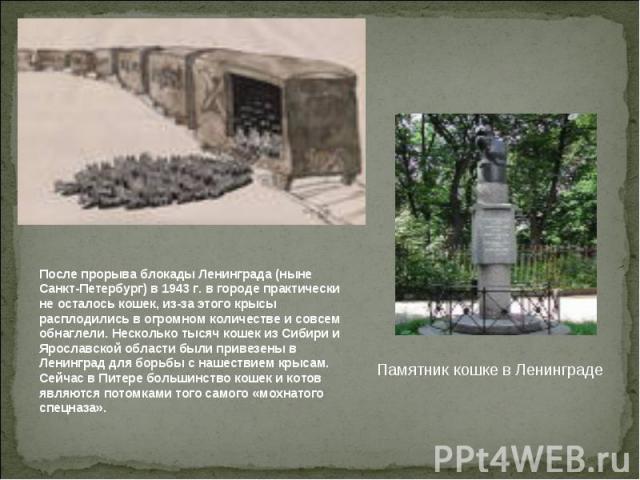 После прорыва блокады Ленинграда (ныне Санкт-Петербург) в 1943 г. в городе практически не осталось кошек, из-за этого крысы расплодились в огромном количестве и совсем обнаглели. Несколько тысяч кошек из Сибири и Ярославской области были привезены в…