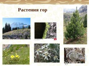 Растения гор