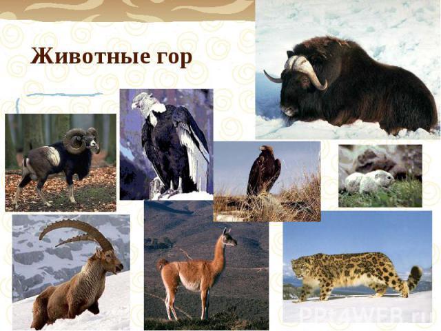 Животные гор