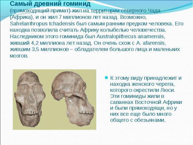 Самый древний гоминид (прямоходящий примат) жил на территории северного Чада (Африка), и он жил 7 миллионов лет назад. Возможно, Sahelanthropus tchadensis был самым ранним предком человека. Его находка позволила считать Африку колыбелью человечества…