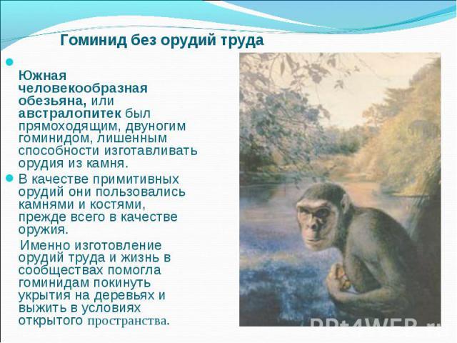 Гоминид без орудий труда Южная человекообразная обезьяна, или австралопитек был прямоходящим, двуногим гоминидом, лишенным способности изготавливать орудия из камня. В качестве примитивных орудий они пользовались камнями и костями, прежде всего в ка…
