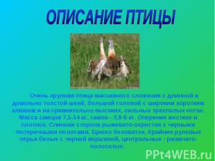 ОПИСАНИЕ ПТИЦЫ Очень крупная птица массивного сложения с длинной и довольно толс