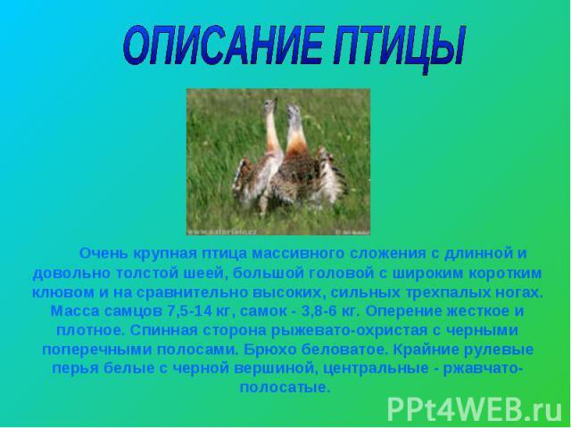 ОПИСАНИЕ ПТИЦЫ Очень крупная птица массивного сложения с длинной и довольно толстой шеей, большой головой с широким коротким клювом и на сравнительно высоких, сильных трехпалых ногах. Масса самцов 7,5-14 кг, самок - 3,8-6 кг. Оперение жесткое и плот…