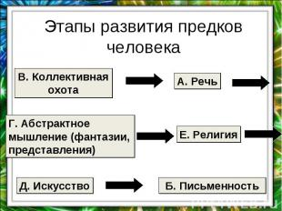 Этапы развития предков человека