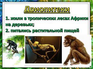 Дриопитеки1. жили в тропических лесах Африки на деревьях;2. питались растительно