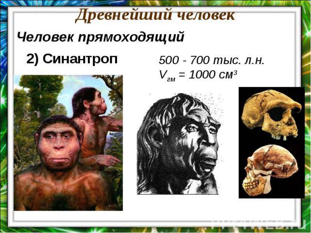 Древнейший человекЧеловек прямоходящий2) Синантроп500 - 700 тыс. л.н.Vгм = 1000 см3