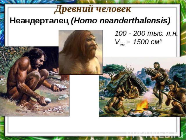 Древний человекНеандерталец (Homo neanderthalensis)100 - 200 тыс. л.н.Vгм = 1500 см3