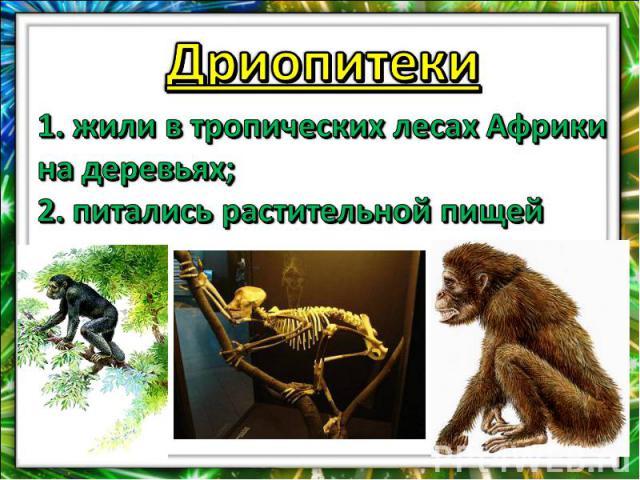 Дриопитеки1. жили в тропических лесах Африки на деревьях;2. питались растительной пищей