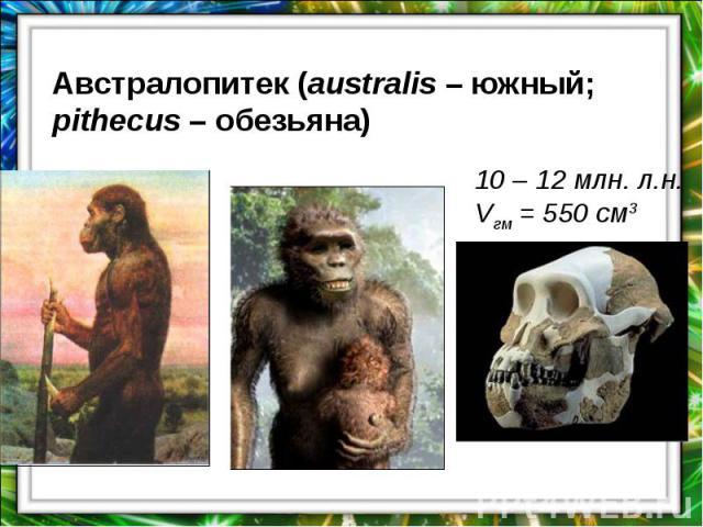Австралопитек (australis – южный; pithecus – обезьяна)10 – 12 млн. л.н.Vгм = 550 см3
