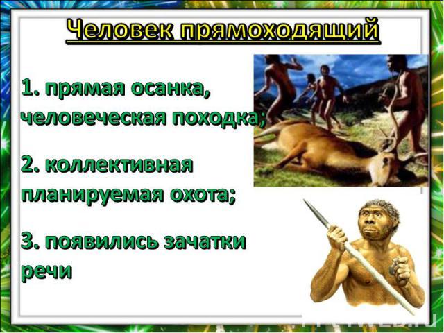 Человек прямоходящий1. прямая осанка, человеческая походка;2. коллективная планируемая охота;3. появились зачатки речи
