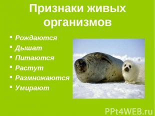 Признаки живых организмов РождаютсяДышатПитаютсяРастутРазмножаютсяУмирают