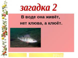 загадка 2В воде она живёт, нет клюва, а клюёт.