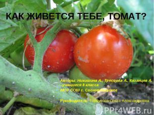 Как живется тебе, томат? Авторы: Никишина А., Тресцова А., Казанцев А. –учащиеся