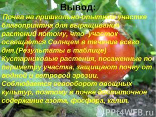 Вывод: Почва на пришкольно-опытном участке благоприятна для выращивания растений
