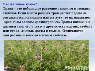 Что же такое трава?Трава – это небольшое растение с мягким и тонким стеблем. Есл