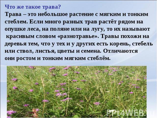Что же такое трава?Трава – это небольшое растение с мягким и тонким стеблем. Если много разных трав растёт рядом на опушке леса, на поляне или на лугу, то их называют красивым словом «разнотравье». Травы похожи на деревья тем, что у тех и у других е…
