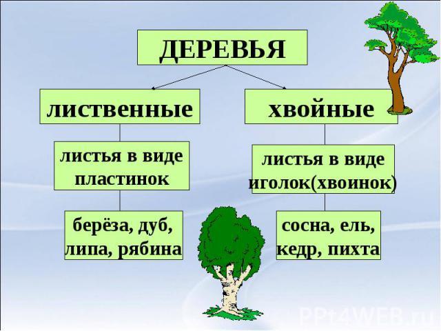 ДЕРЕВЬЯлиственныелистья в видепластинокберёза, дуб,липа, рябинахвойныелистья в виде иголок(хвоинок) сосна, ель,кедр, пихта
