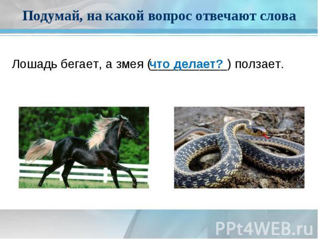 Подумай, на какой вопрос отвечают словаЛошадь бегает, а змея (___________)ползает.