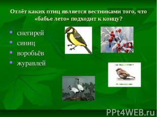 Отлёт каких птиц является вестниками того, что «бабье лето» подходит к концу? сн
