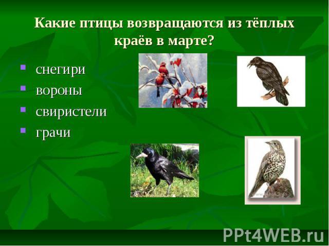 Какие птицы возвращаются из тёплых краёв в марте? снегири вороны свиристели грачи