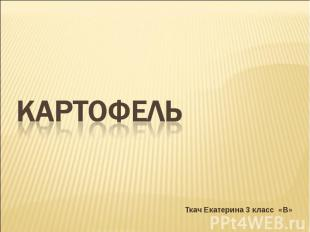 Картофель Ткач Екатерина 3 класс «В»