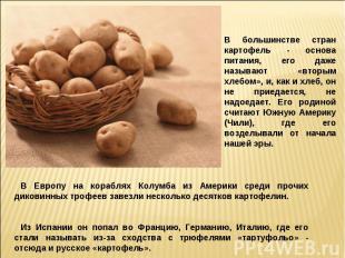 В большинстве стран картофель - основа питания, его даже называют «вторым хлебом