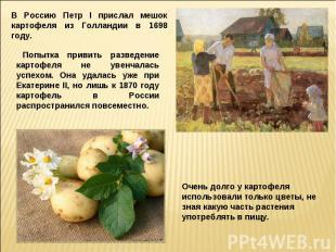 В Россию Петр I прислал мешок картофеля из Голландии в 1698 году.Попытка привить