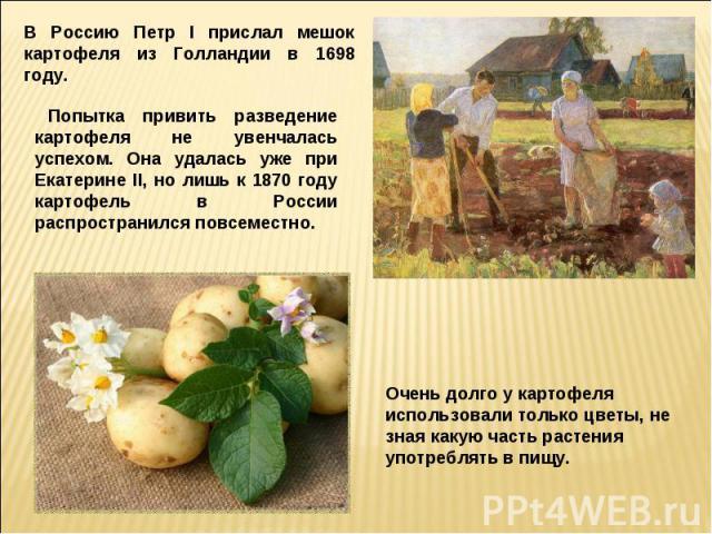 В Россию Петр I прислал мешок картофеля из Голландии в 1698 году.Попытка привить разведение картофеля не увенчалась успехом. Она удалась уже при Екатерине II, но лишь к 1870 году картофель в России распространился повсеместно.Очень долго у картофеля…