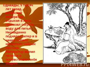 Однажды, 5 тысяч лет назад, китайский император, отдыхая в лесу, приказал согрет