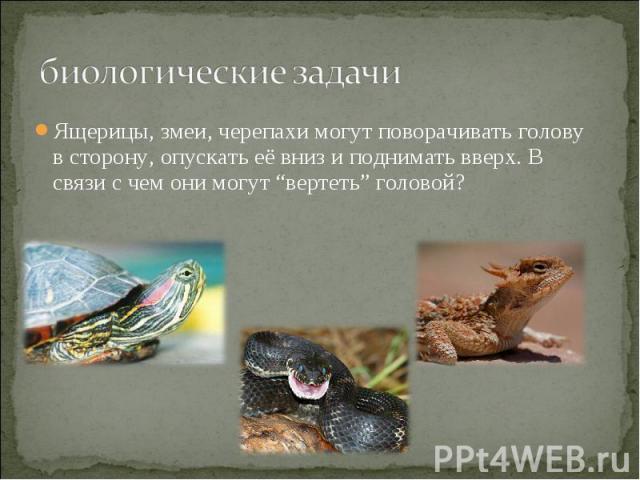 """биологические задачи Ящерицы, змеи, черепахи могут поворачивать голову в сторону, опускать её вниз и поднимать вверх. В связи с чем они могут """"вертеть"""" головой?"""