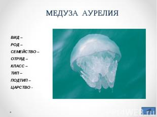 МЕДУЗА АУРЕЛИЯВИД –РОД –СЕМЕЙСТВО –ОТРЯД – КЛАСС –ТИП – ПОДТИП – ЦАРСТВО -