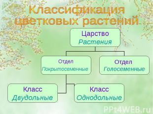 Классификация цветковых растений